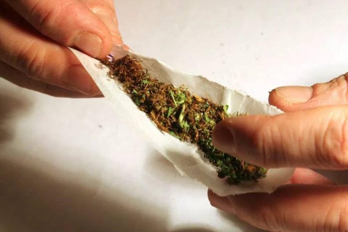 I 5 Stelle vogliono legalizzare il consumo di cannabis, ma Salvini si oppone