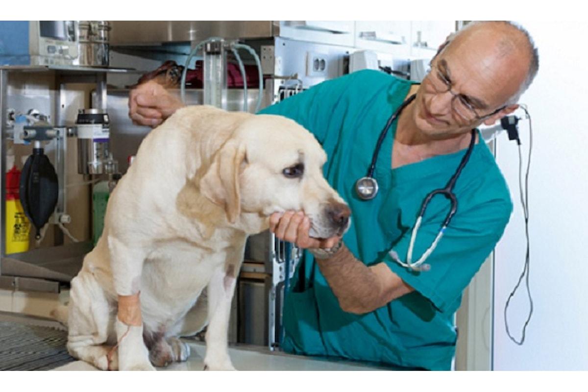 Milazzo (ME) - Assistenza veterinaria: accordo Comune-Università