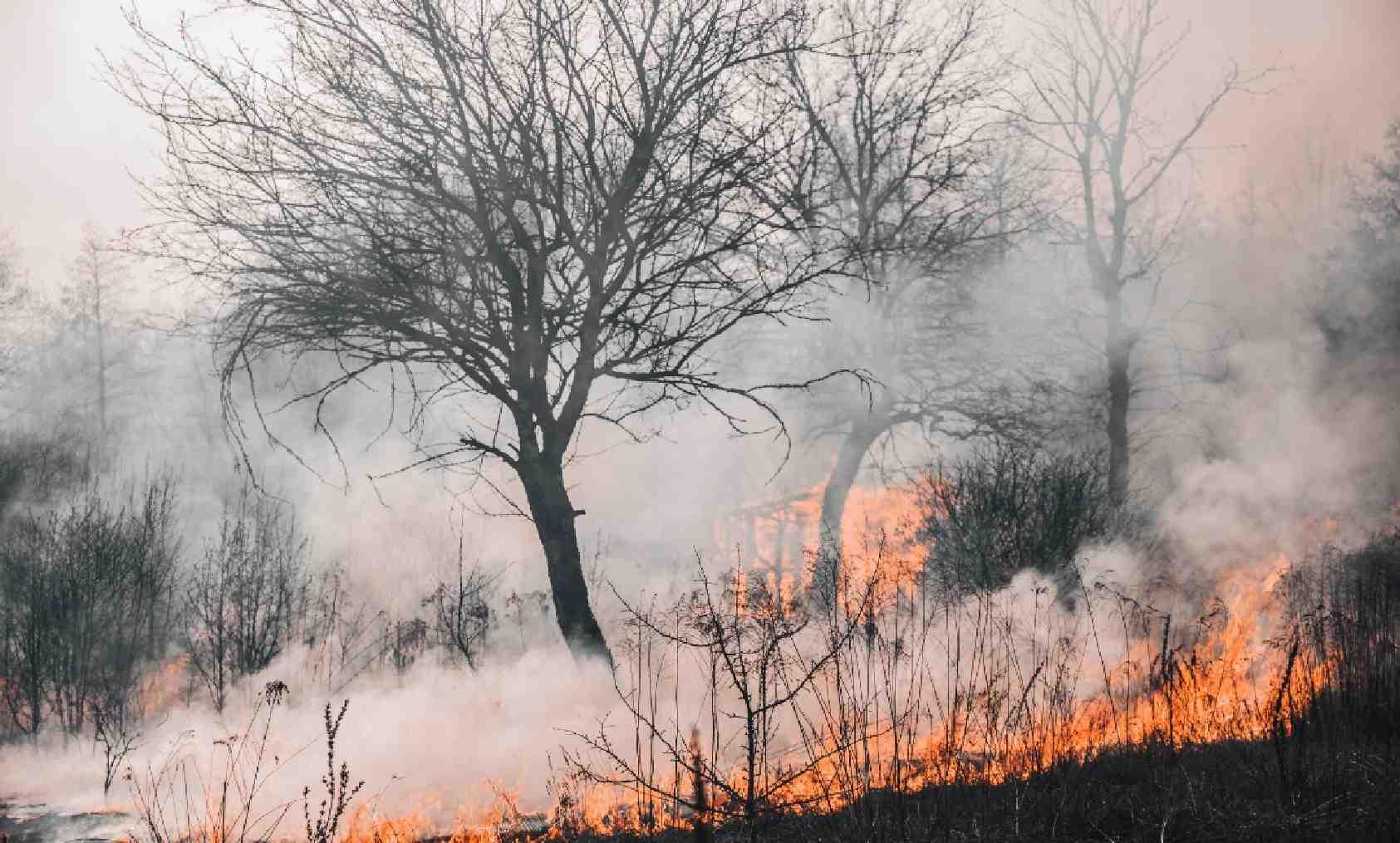 """""""Incendiare le stoppie è una pratica agricola dannosa per il suolo e favorisce l'innesco di vasti incendi, serve una stretta su normative troppo permissive e su deroghe adottate da molte regioni"""""""