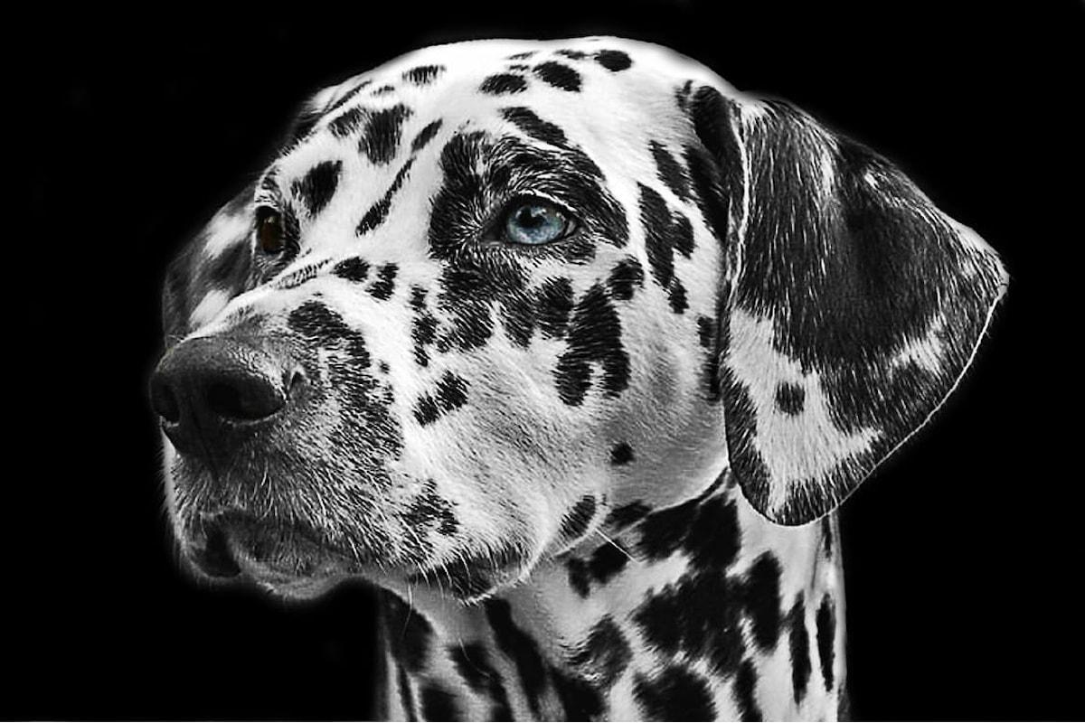 Prurito del cane: Sintomi, cause, cura e trattamento