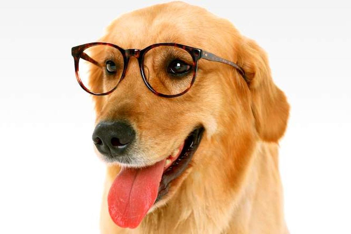 I cani capiscono ciò che gli viene detto. Lo dice una ricerca pubblicata su Science