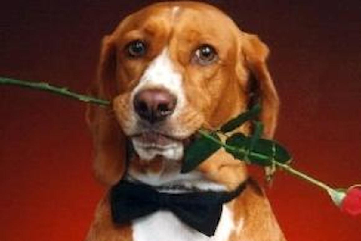 Strage di Cani a Rende, ecco i provvedimenti presi dagli enti che tutelano la cinofilia