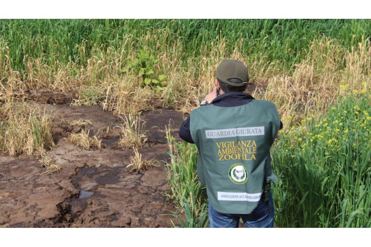 Smaltimento illecito di reflui: sequestrata azienda zootecnica nel salernitano