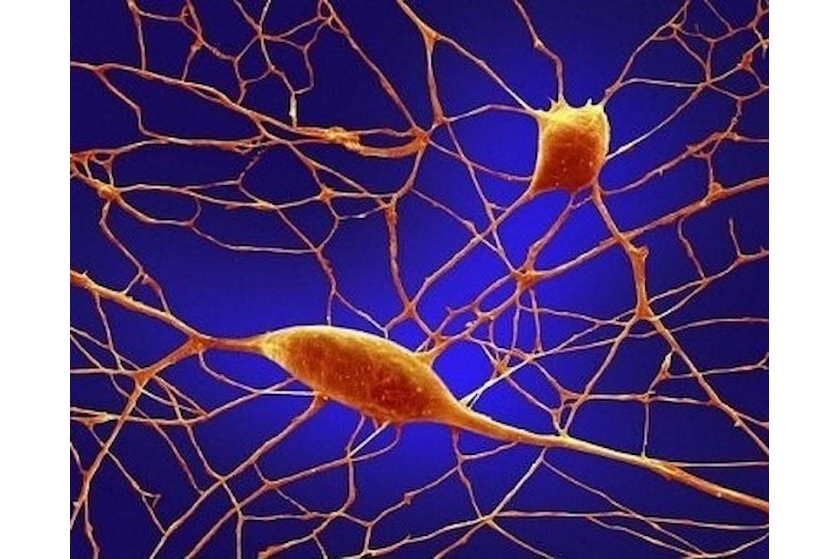 L'immaginazione risiede nelle cellule Gps del cervello