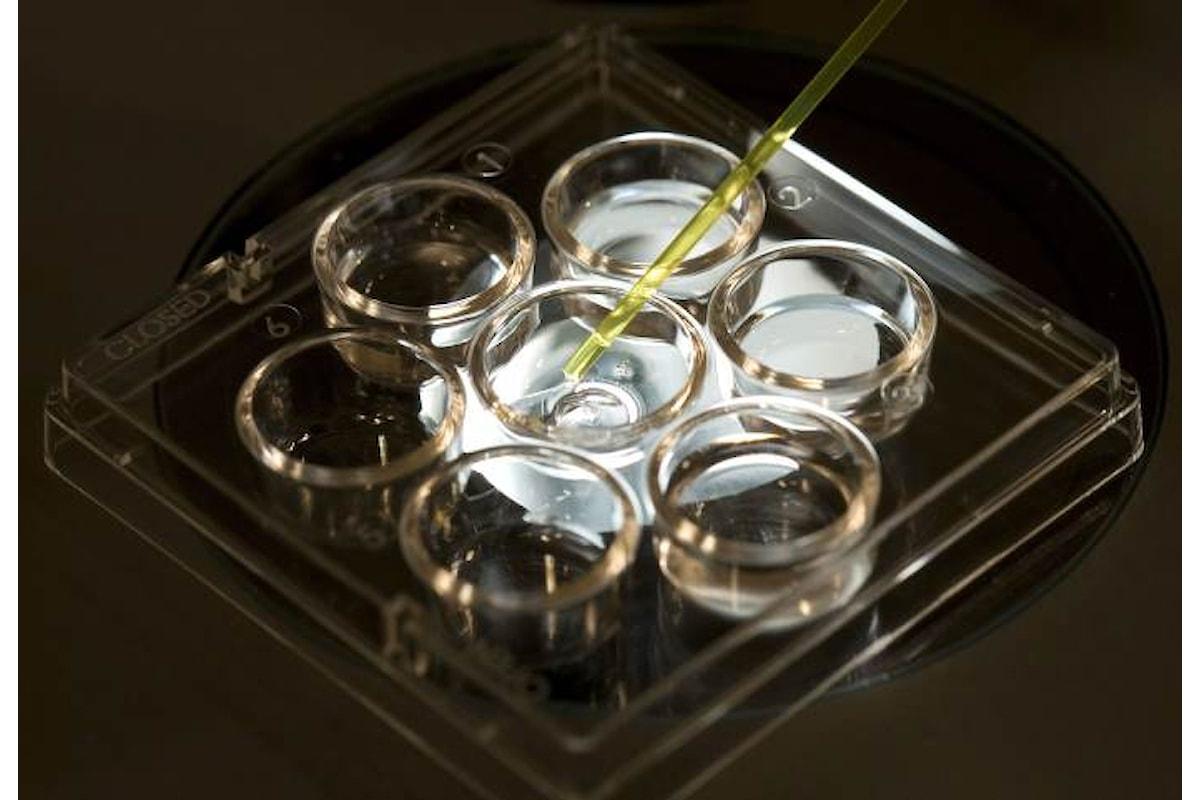 In risposta al Papa l'associazione Luca Coscioni chiede di inserire nei LEA anche le indagini diagnostiche preimpianto sull'embrione