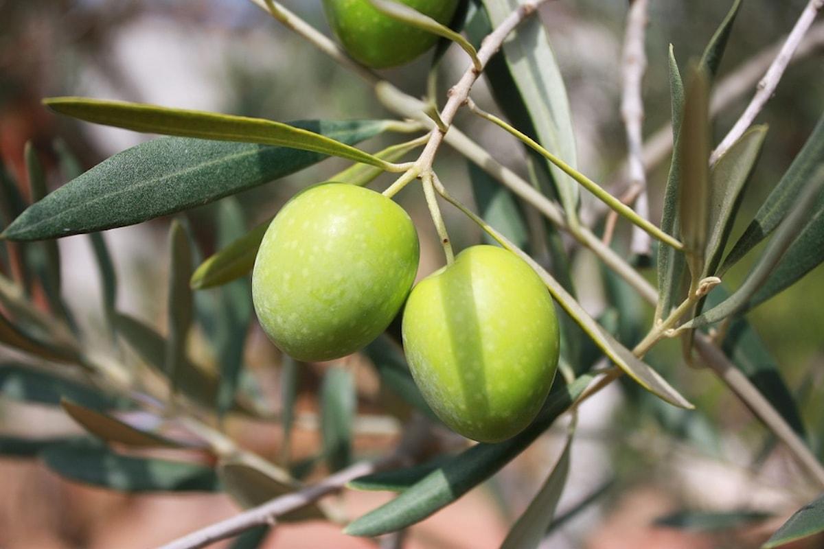 Acquistare olio extravergine di oliva di qualità